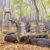 Horní Jiřetín si na kácení bukových lesů stěžuje Evropské komisi