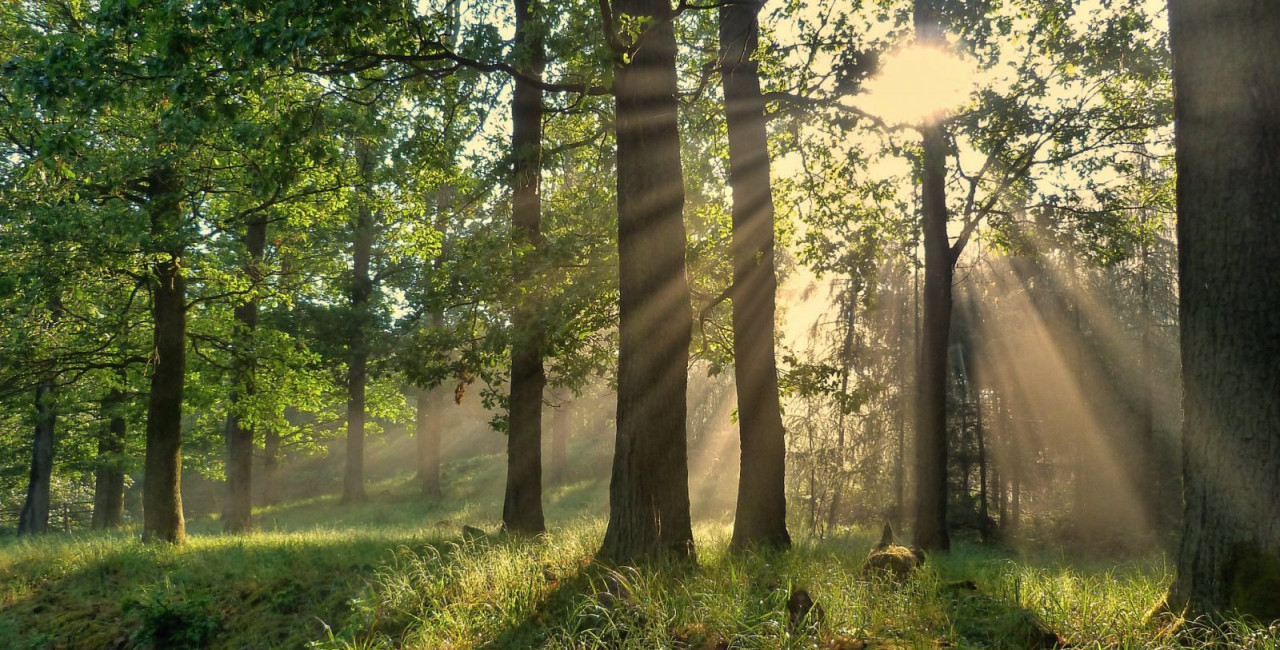 this-weekend-help-plant-a-22nd-century-forest-for-the-czech-republic-jpg-wfeok